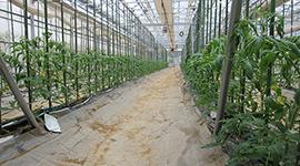 農業クラウド導入後の農家の声に応えた次世代養液土耕システム